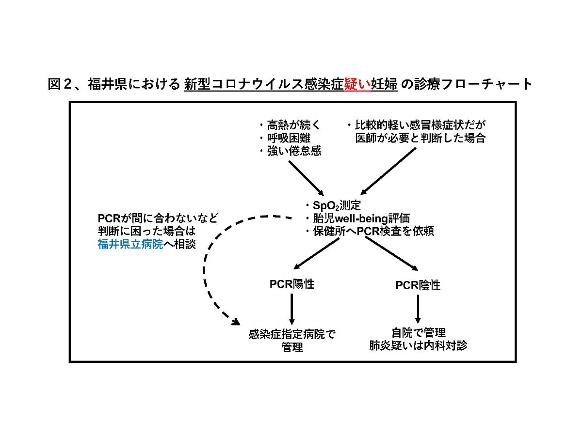 福井 県 コロナ ウイルス 感染